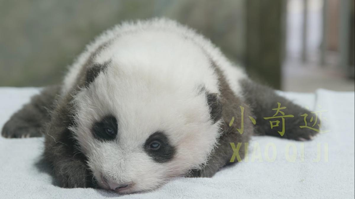 The Smithsonian National Zoo's baby panda has a name.