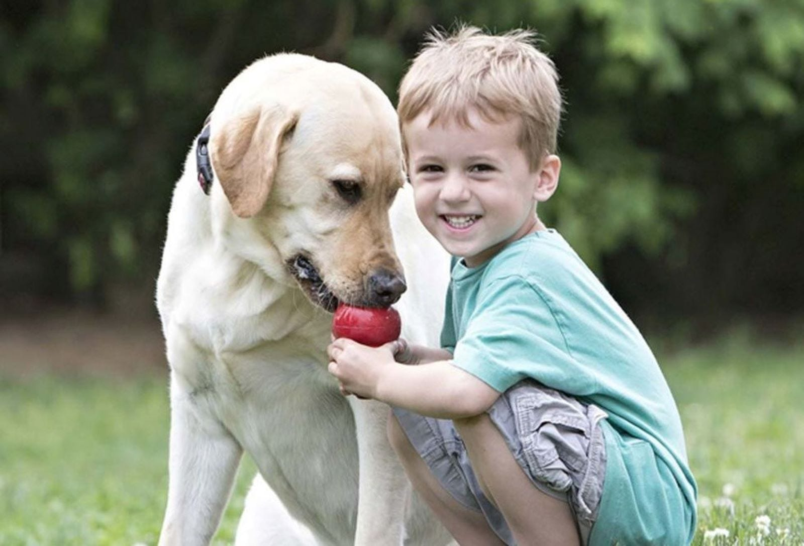 A little boy playing with a yellow Lab with a KONG Classic dog toy.