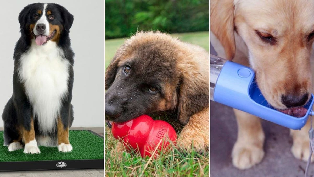 A medium dog on the PETMAKER Potty Grass, a puppy chewing on a Kong Classic toy, and a Golden Retriever drinking out of a Sofunii Dog Water Bottle.