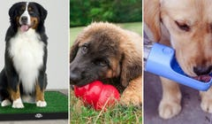 10 Necessities for Apartment-Dwelling Dog Owners