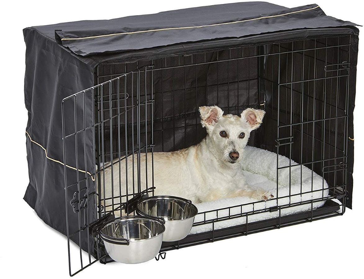 A white dog in the 30-inch iCrate.
