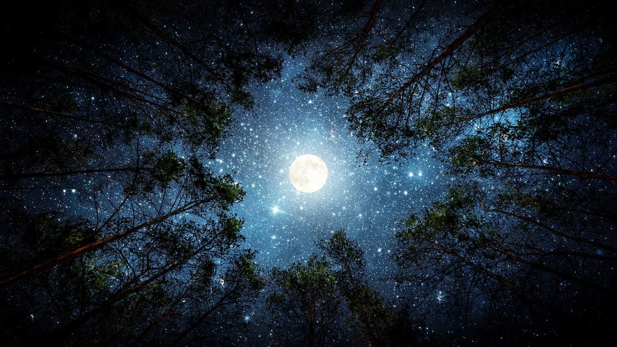 The moon as seen through the crowns of trees.