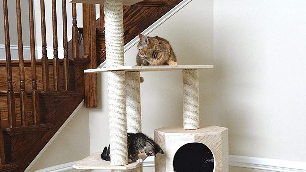Cats hanging out on a cat tree.