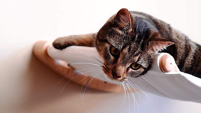 Cat in a hammock.