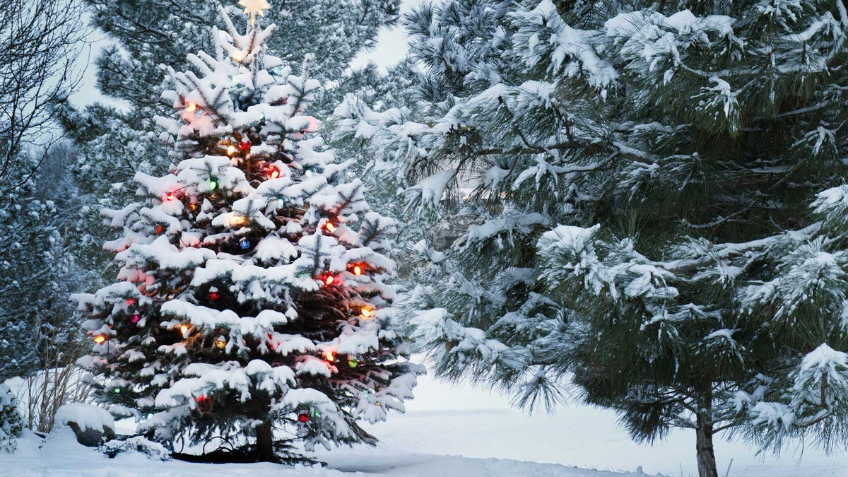 A Christmas tree in a snowy forest, lit up with festive lights.