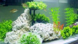 The Best Aquarium Plants for Your Fish Habitat