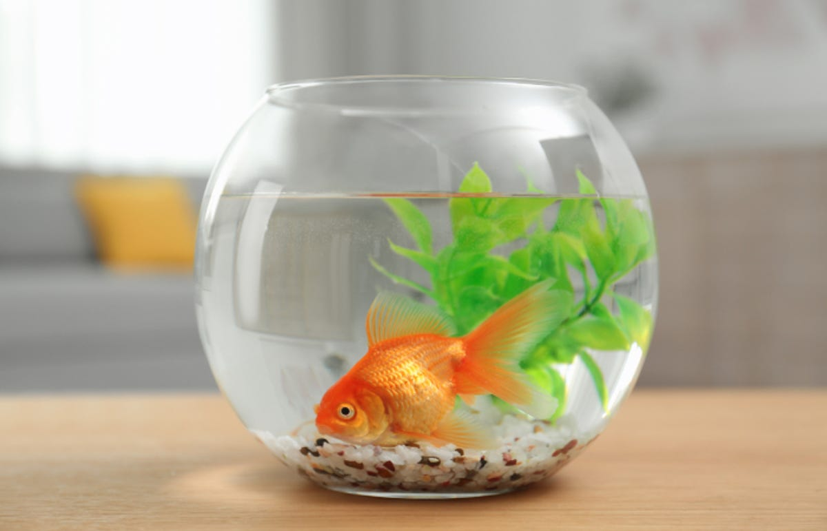 a goldfish in a clear, round fishbowl with a small plant and gravel resting on a table