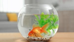 The Best Fishbowls for Your Home
