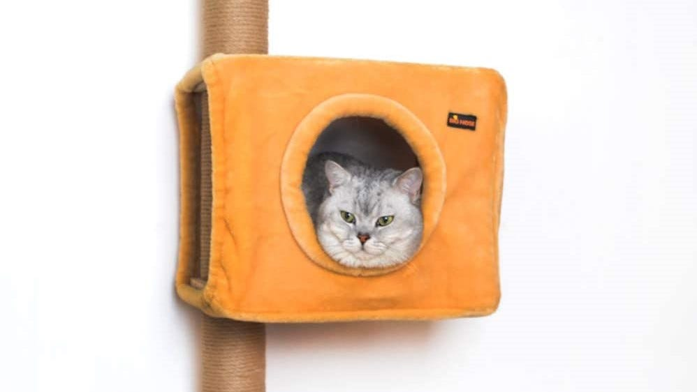 A cat lounging inside a wall-mounted cat condo.