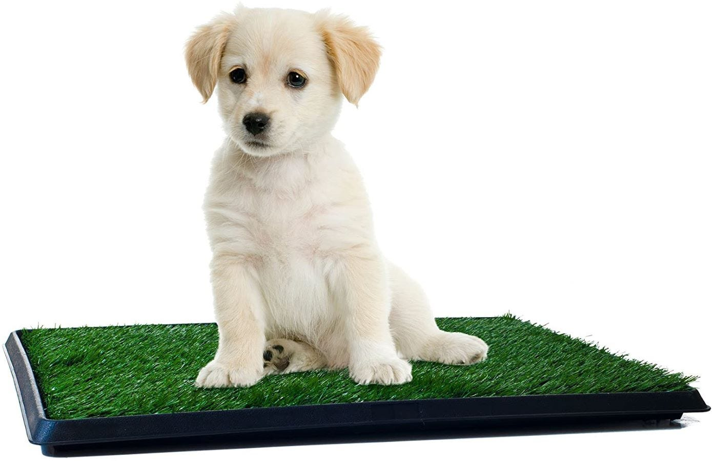 A Golden Retriever puppy sitting on the small puppy grass pad.