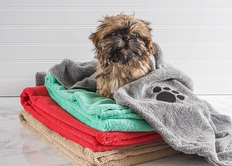 A shih tzu wrapped in a pet towel.