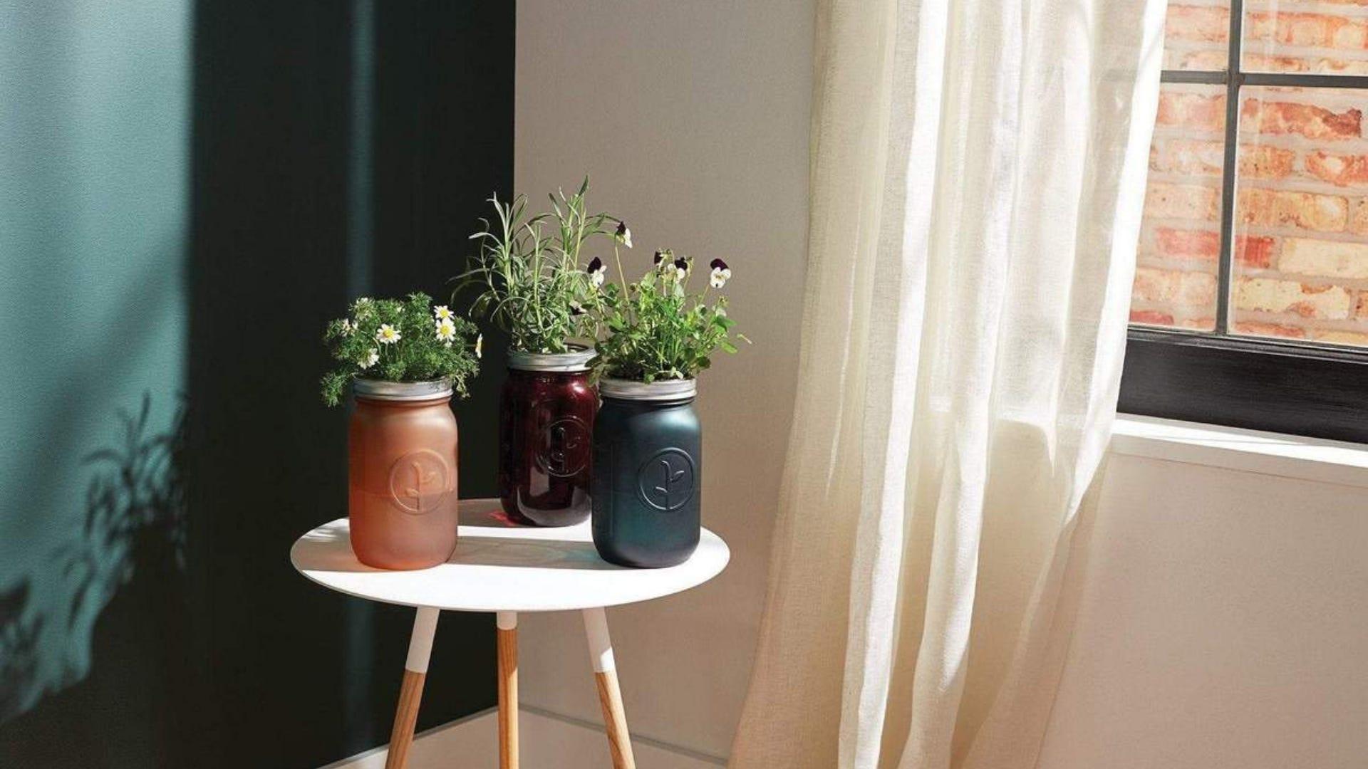 Three jars growing plants near windowsill