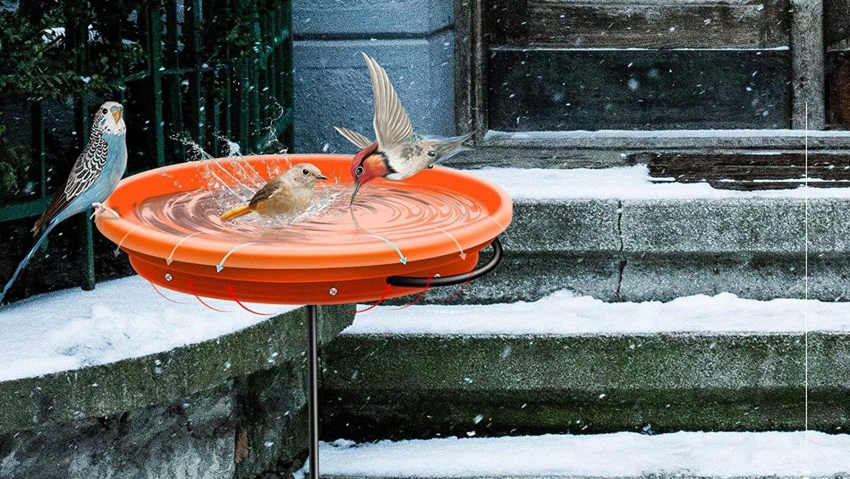 Birds enjoying a winter dip in a heated birdbath.
