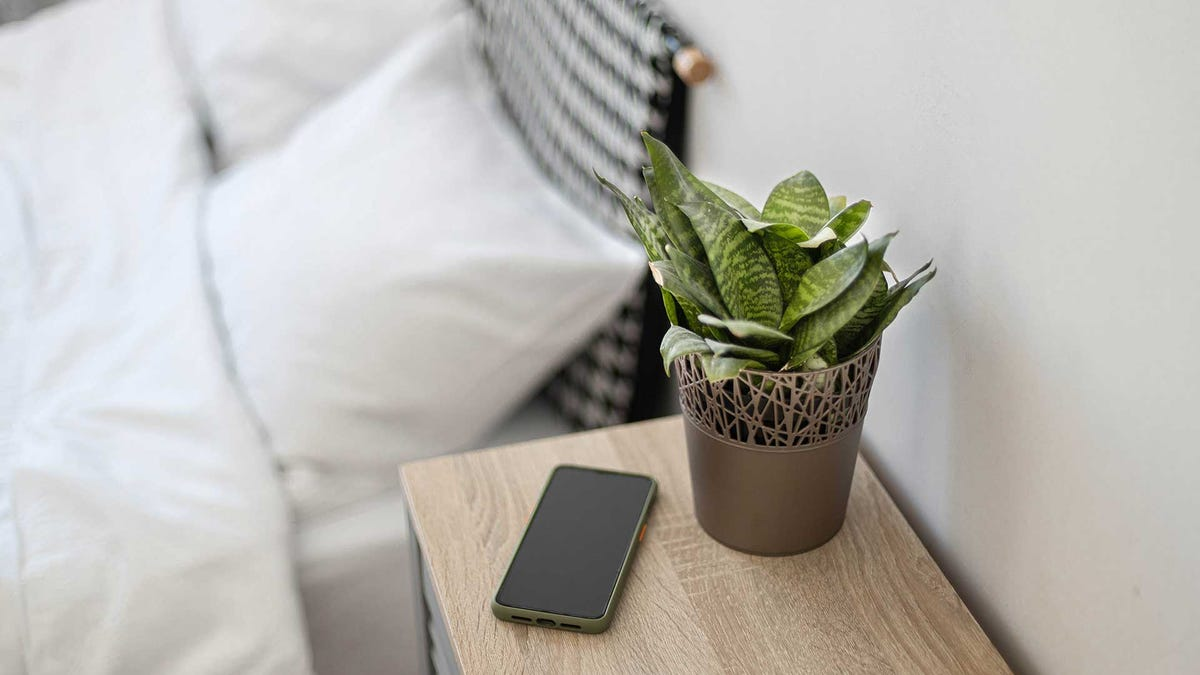A small plant on a nightstand next to a smartphone.
