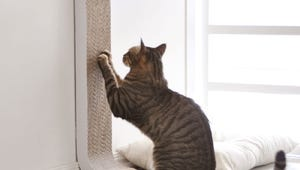 The Best Cat Scratching Posts for Your Feline Friend