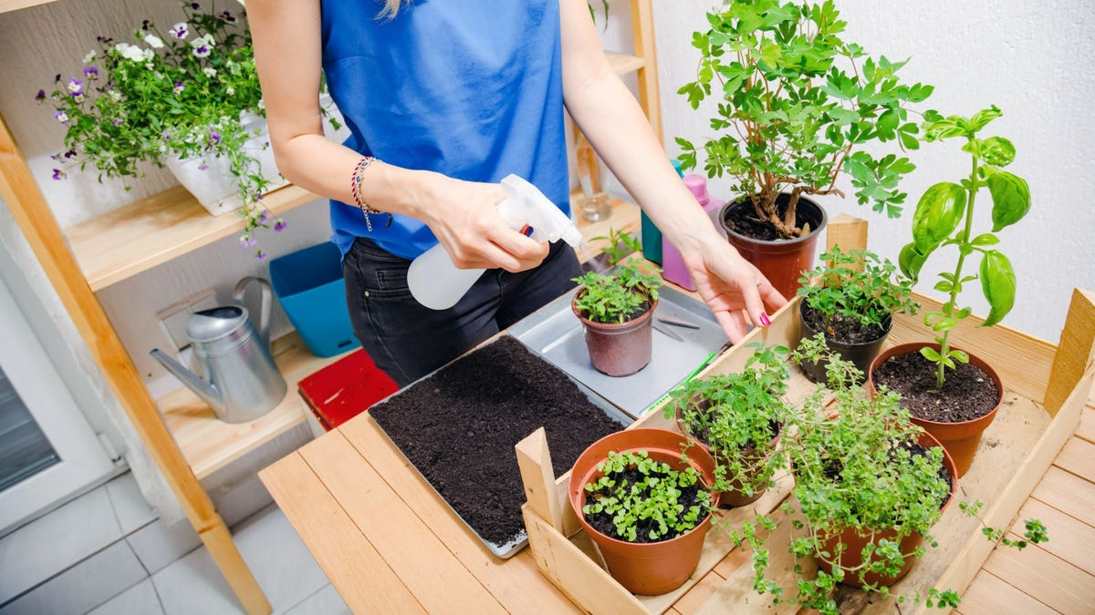 A woman sprays water over different house plants.