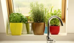 Your Indoor Kitchen Garden Will Flourish with These Tips