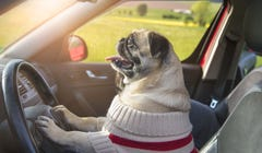 Handy Car Accessories for Road-Trippin' Dogs