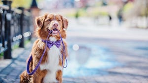 These Are the Calmest Dog Breeds
