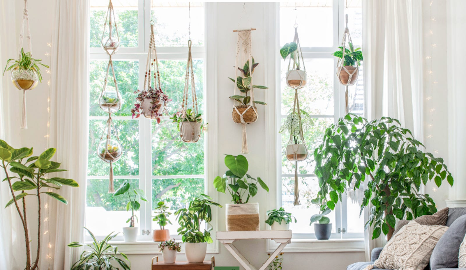 A living room window with several macrame hanging planters with plants in them