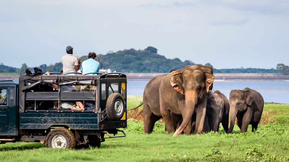 People in a safari vehicle taking pictures of a mother elephant and her two babies.