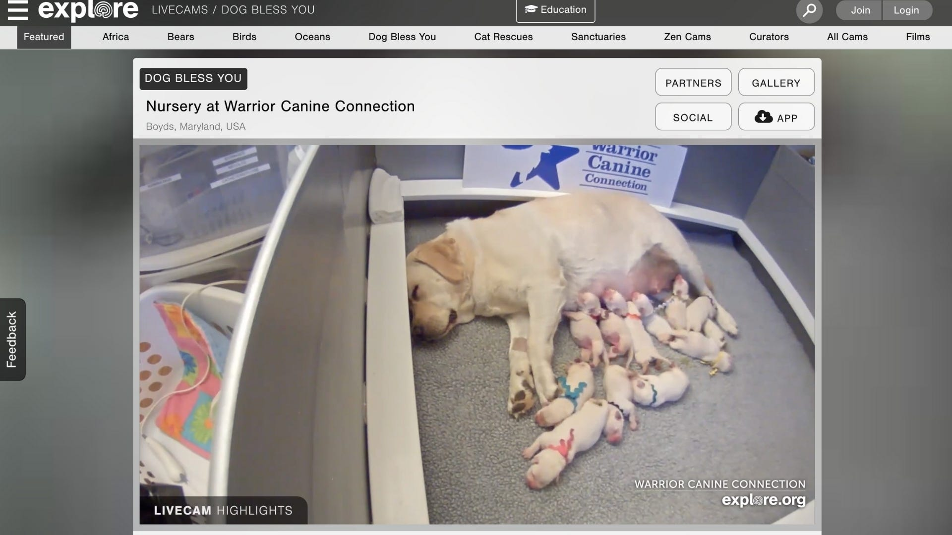 Live cam of puppies drinking milk from mom