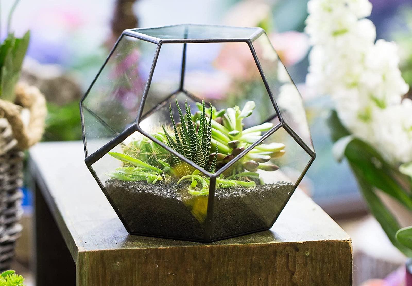 A glass geometric terrarium with plants inside, sitting on a wood block