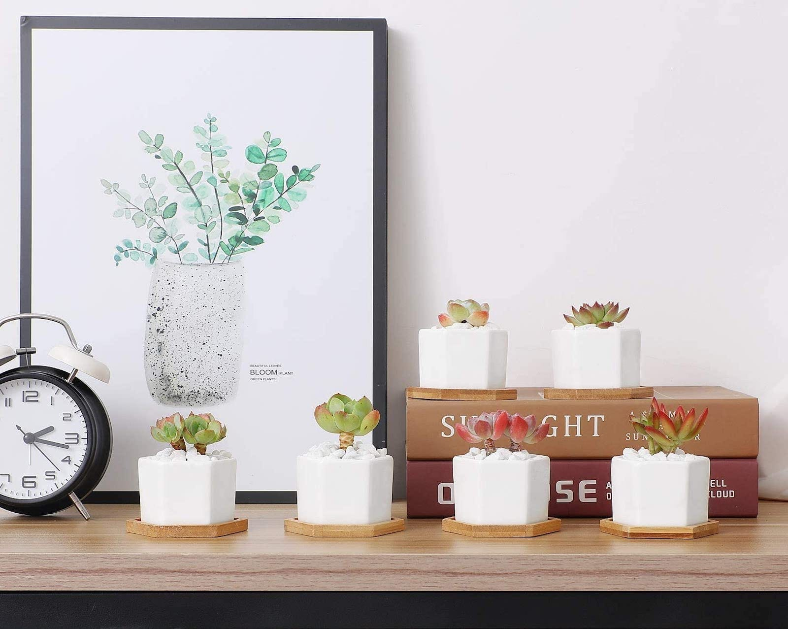 A shelf with several small white hexagonal planters with succulents in them