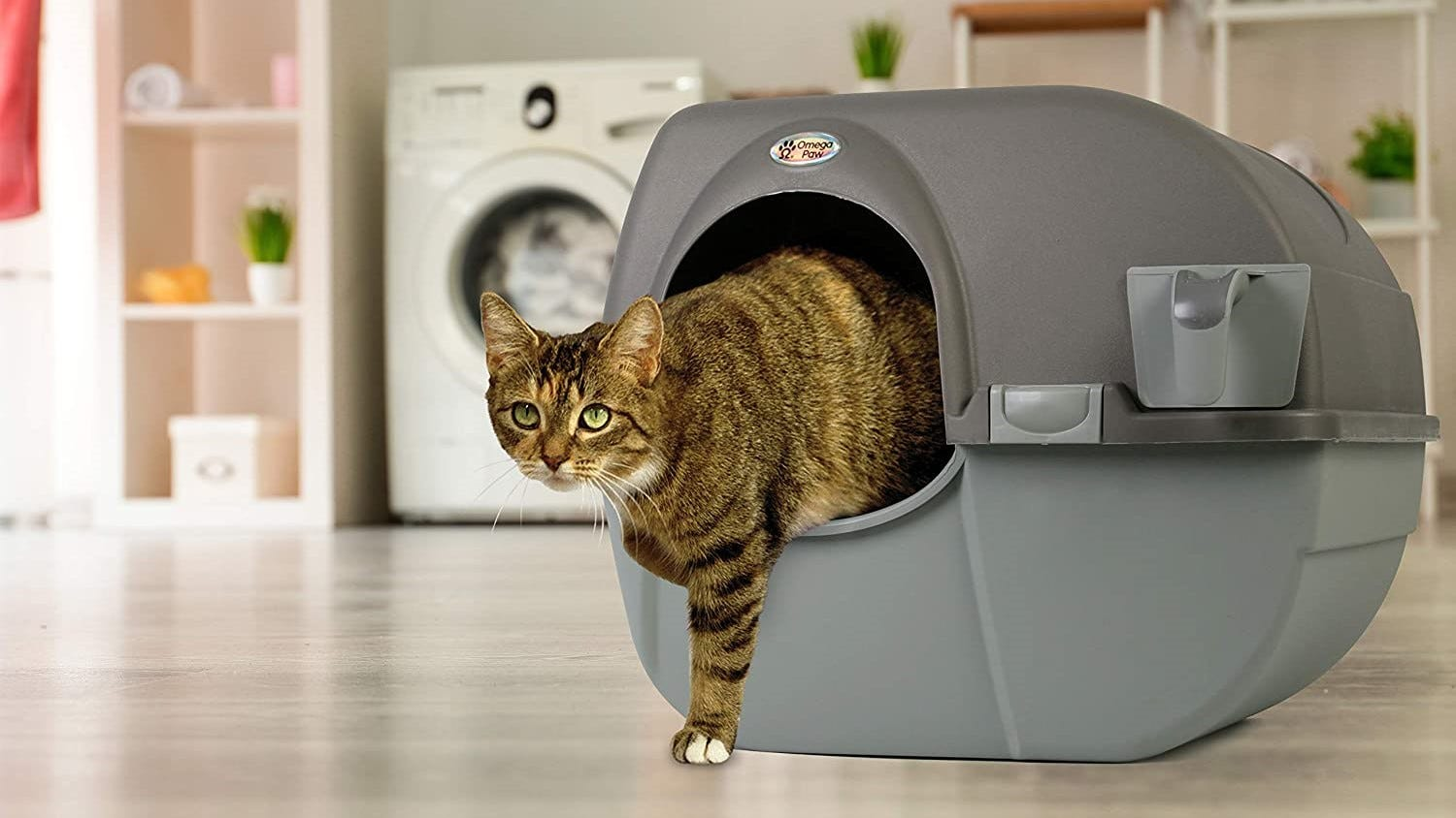 A tabby cat stepping out of the Mega Paw Roll 'n Clean Litter Box.