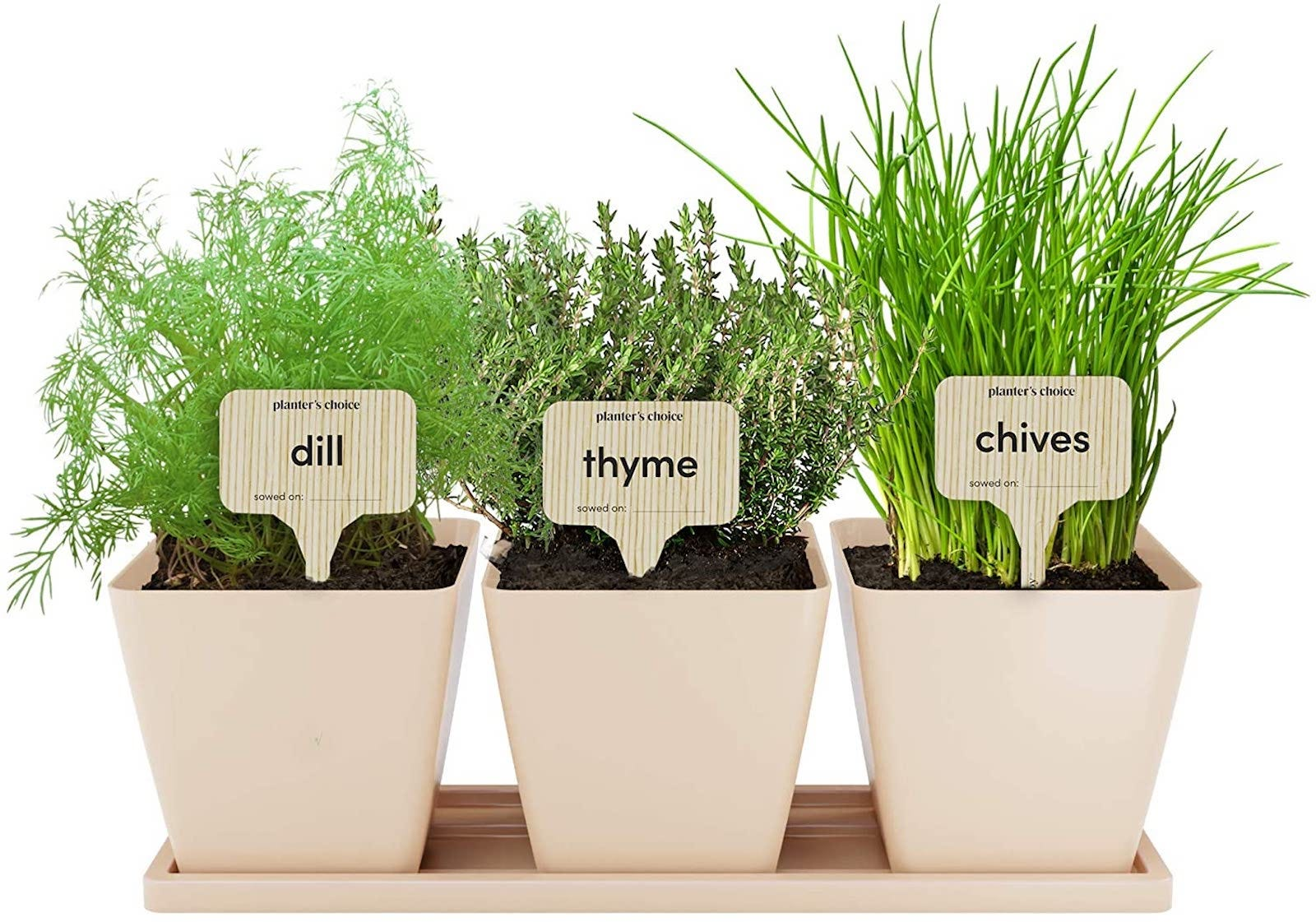 A mini herb garden in pots.