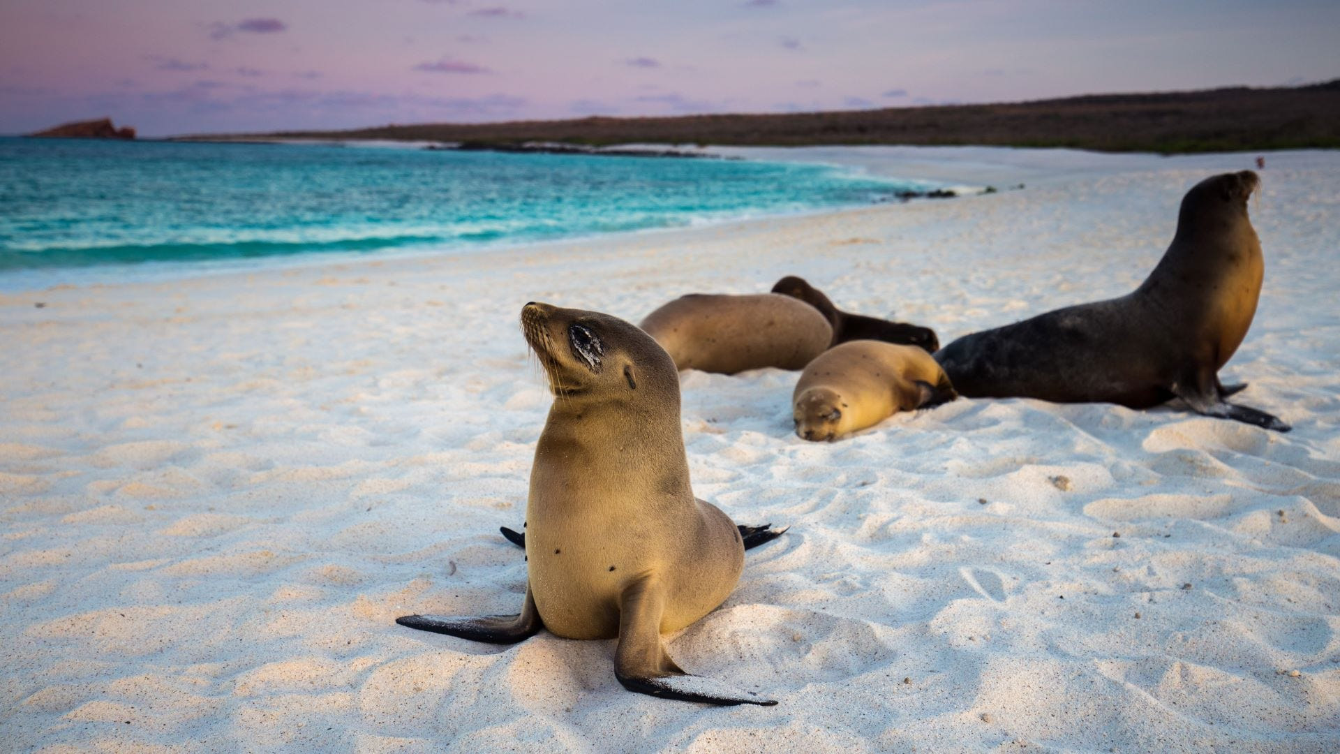 Five sea lions on the beach.