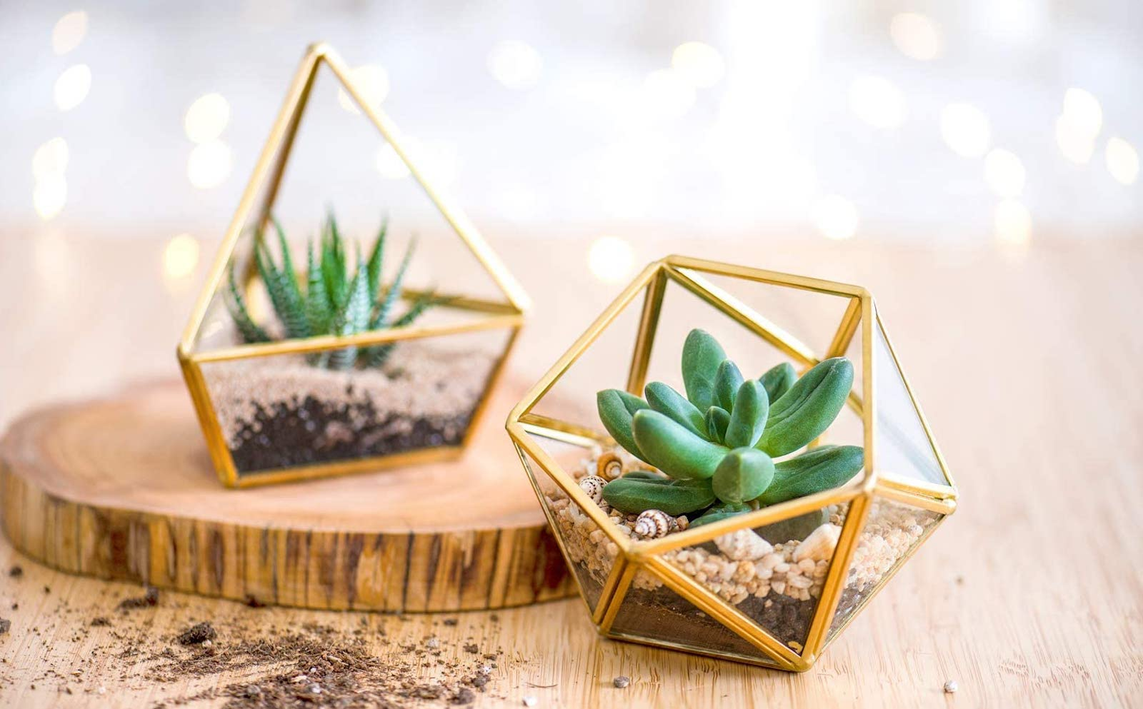 Two gold-and-glass geometric mini terrariums, with succulents inside, on a wooden surface