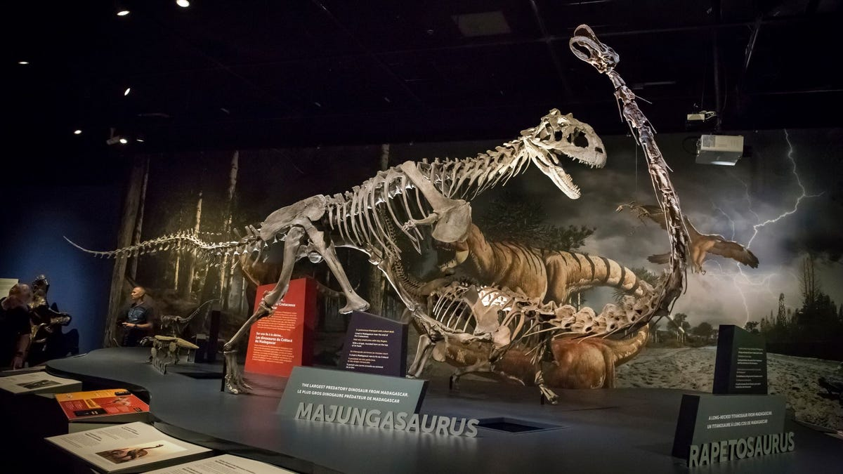 A dinosaur exhibit at the San Diego Natural History Museum.