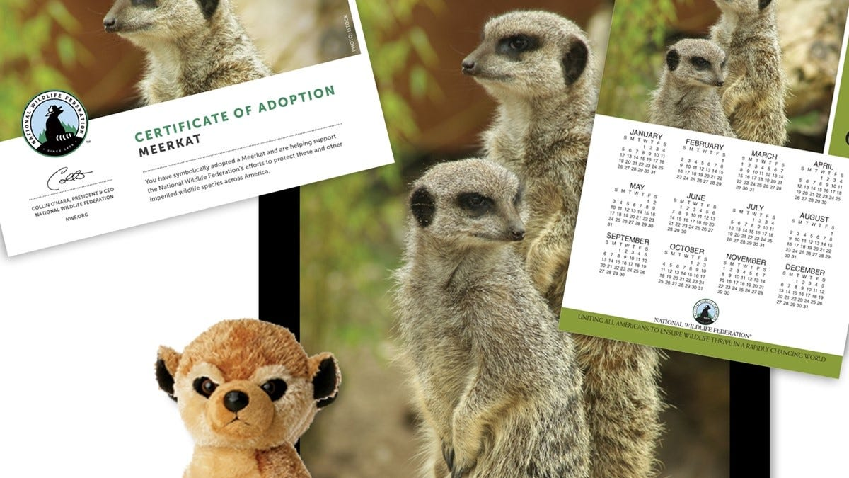 The meerkat adoption kit.