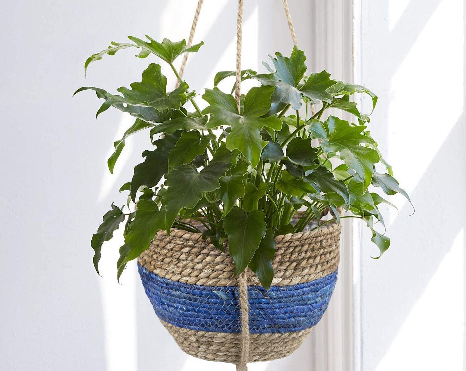 The blue stripe La Jolíe Muse Seagrass Hanging Planter.