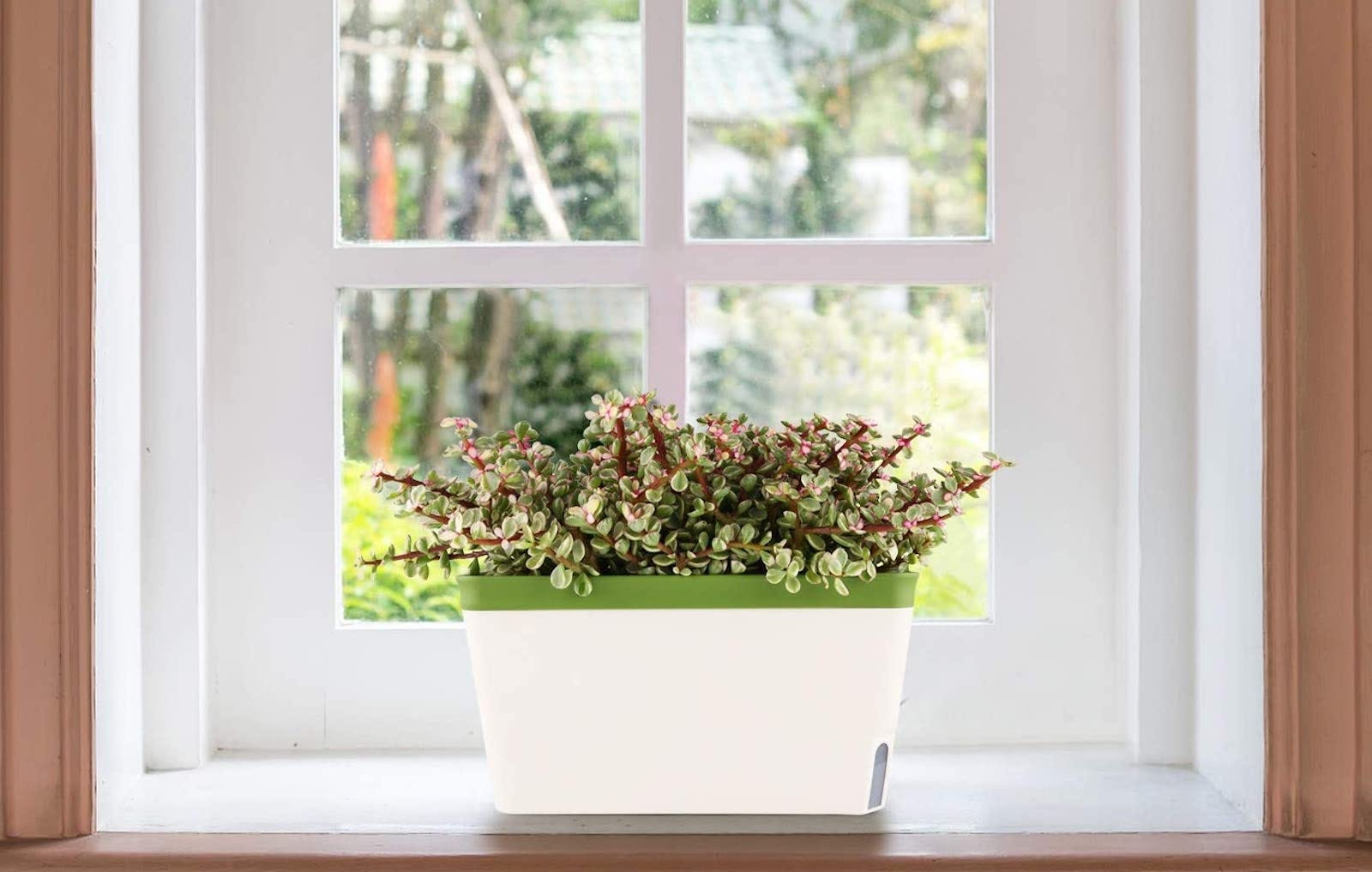 A white rectangular planter with a leafy plant in it sits in a window