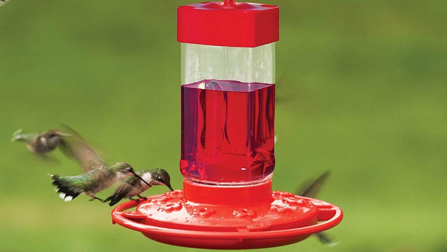 Hummingbirds at a feeder.