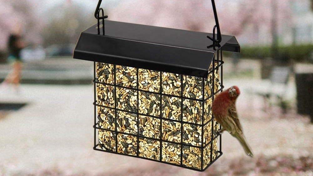 Suet cake bird feeder hanging in a tree.