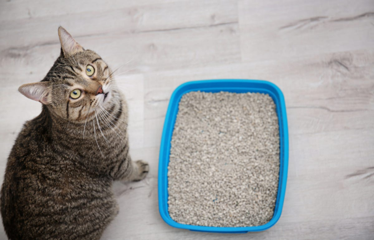Adorable cat near litter tray indoors.