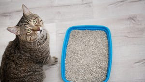 The Best Cat Litters for Your Feline