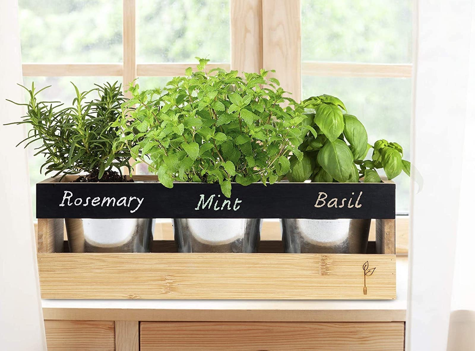A wood planter with three labeled pots of herbs sitting in a window