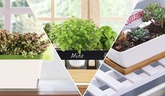 Green Up Your Home with These 7 Window Planters