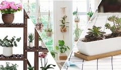 Turn Your Home Into a Green Paradise with These Products