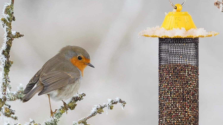 Finch feeder hanging outside.