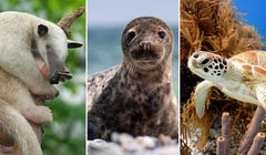 Adopt an Animal This Year in Honor of World Wildlife Day