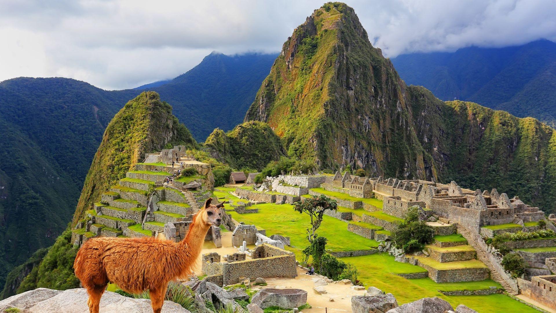 Llama standing at Machu Picchu.