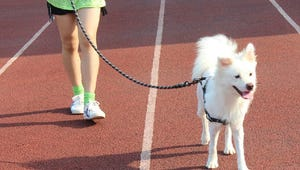The Best Leashes for Your Pet
