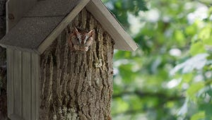 The Best Bird Boxes You Can Buy