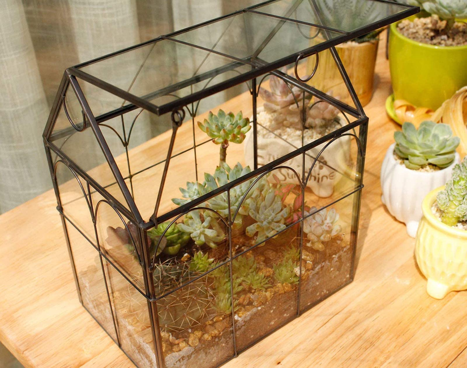 A glass and metal terrarium with succulents inside, sitting on a wood table