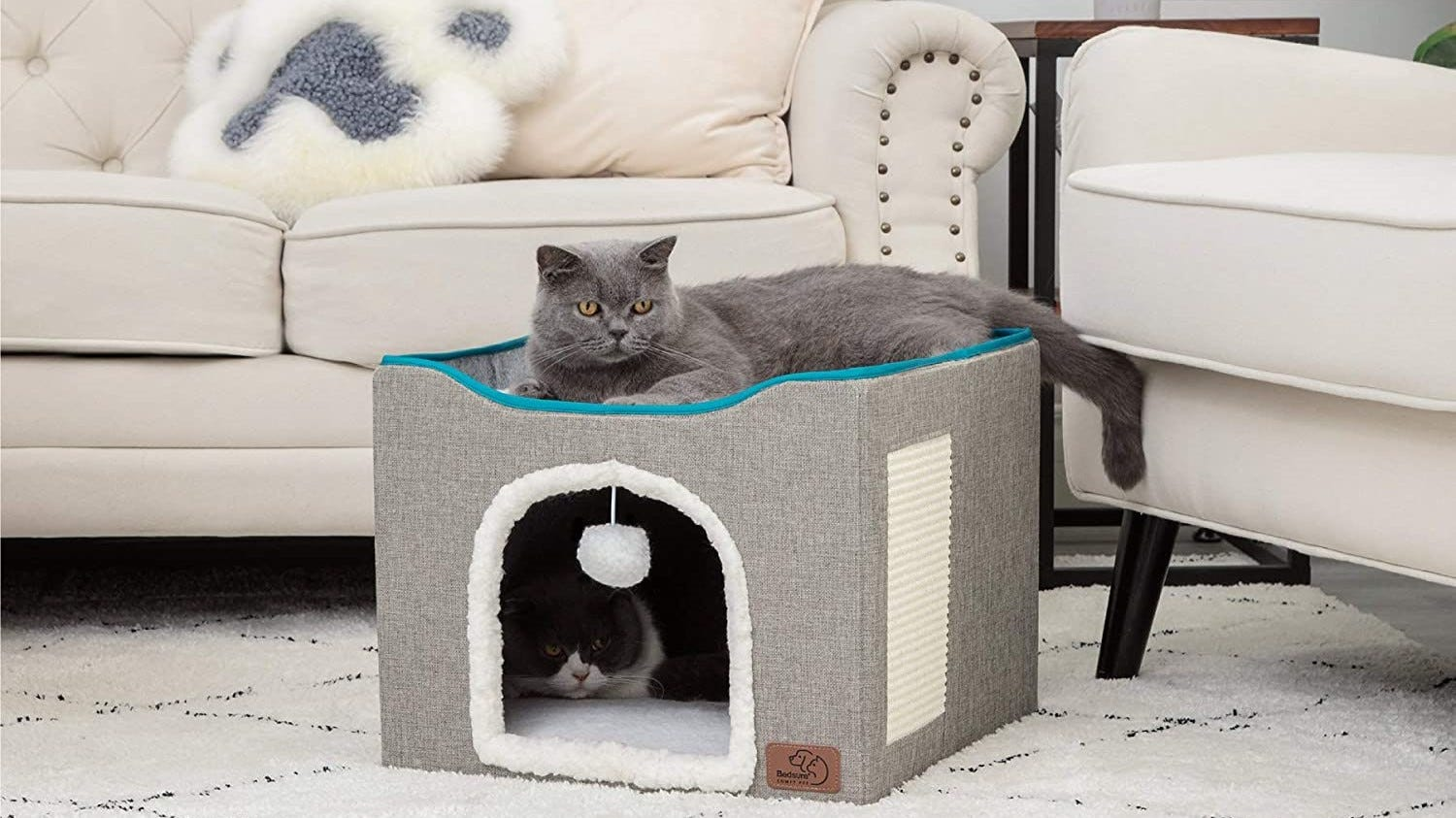 One cat inside and one on top of the Bedsure Cat Cube.